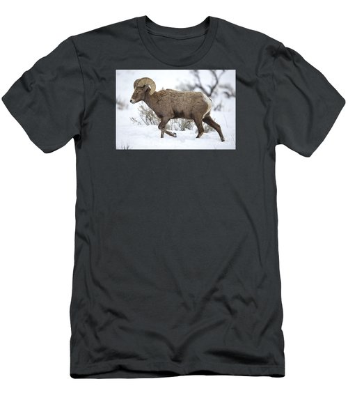 Winter Ram Men's T-Shirt (Athletic Fit)