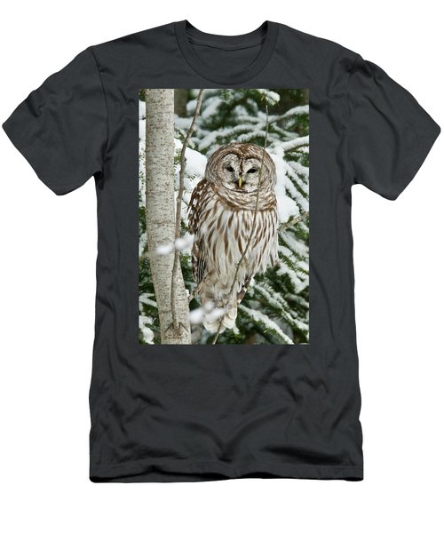 Winter Time Barred Owl Men's T-Shirt (Athletic Fit)