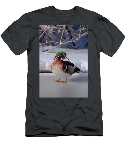Wood Duck In Winter Snow And Ice, Montana, Usa Men's T-Shirt (Athletic Fit)