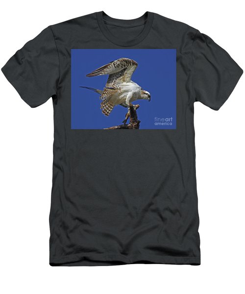 Yearling Osprey Men's T-Shirt (Athletic Fit)