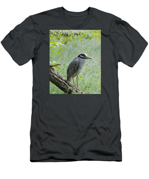 Yellow-crowned Night Heron 1 Men's T-Shirt (Athletic Fit)