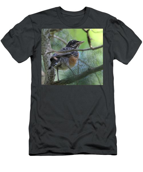 Young American Robin Setauket New York Men's T-Shirt (Slim Fit) by Bob Savage
