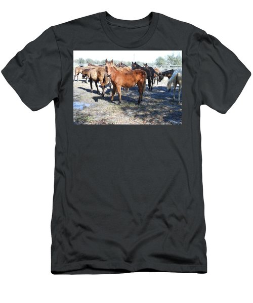 Young Cracker Horses Men's T-Shirt (Slim Fit) by Kay Gilley