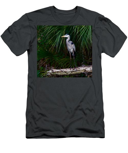 Young Great Blue Heron Men's T-Shirt (Athletic Fit)