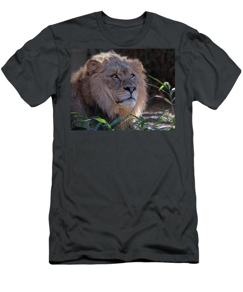Young Lion King Men's T-Shirt (Slim Fit) by Ronda Ryan