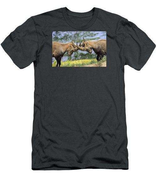 Young Male Wild Alpine, Capra Ibex, Or Steinbock Men's T-Shirt (Slim Fit) by Elenarts - Elena Duvernay photo