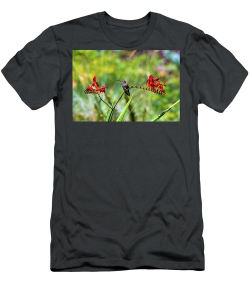 Young Rufous Hummingbird Perched On Flower Men's T-Shirt (Athletic Fit)