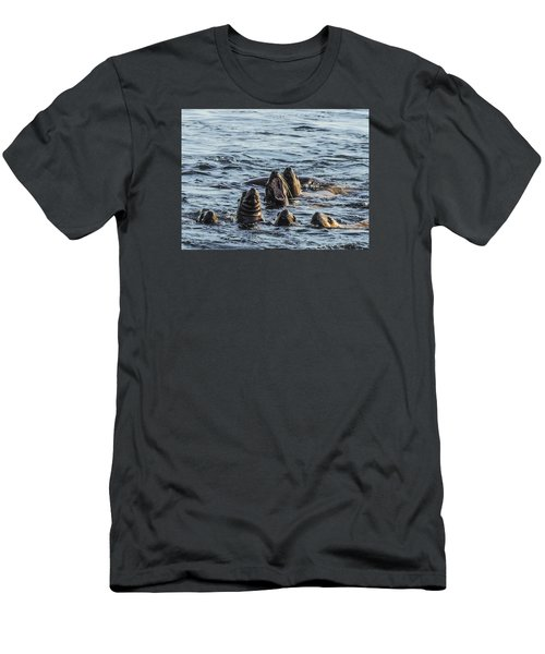 Young Sea Lions At Play Men's T-Shirt (Athletic Fit)