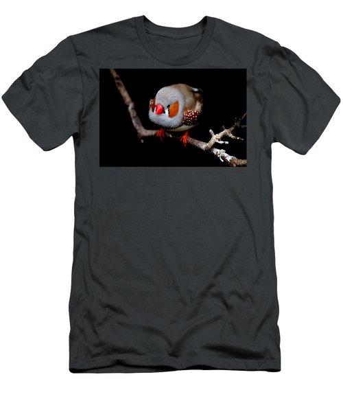 Zebra Finch Men's T-Shirt (Athletic Fit)