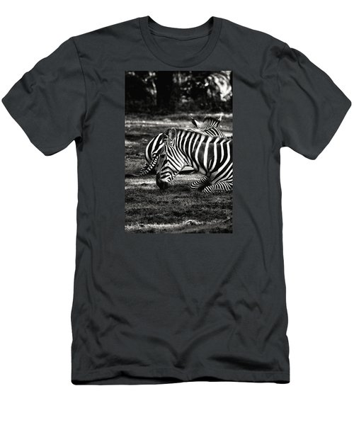 Zebras Men's T-Shirt (Slim Fit) by Nikki McInnes