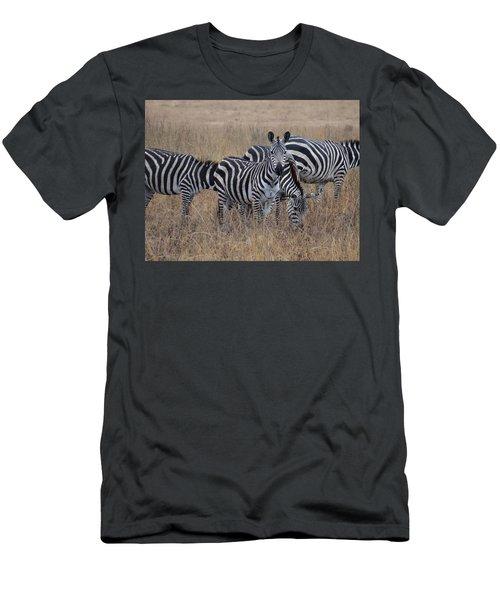 Zebras Walking In The Grass 2 Men's T-Shirt (Slim Fit) by Exploramum Exploramum