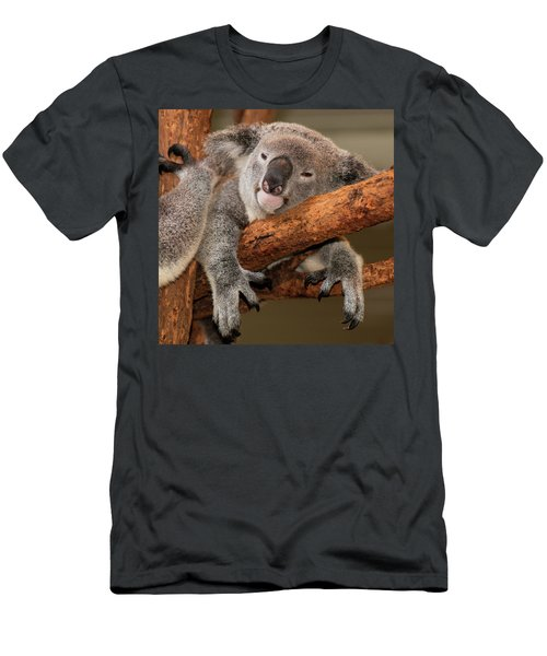 Cute Australian Koala Resting During The Day. Men's T-Shirt (Athletic Fit)