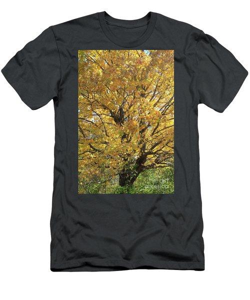 2018 Edna's Tree Up Close Men's T-Shirt (Athletic Fit)