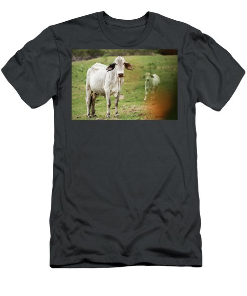 Men's T-Shirt (Athletic Fit) featuring the photograph Australian Cow by Rob D Imagery