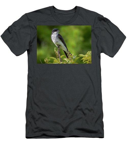 Eastern Kingbird  Men's T-Shirt (Athletic Fit)