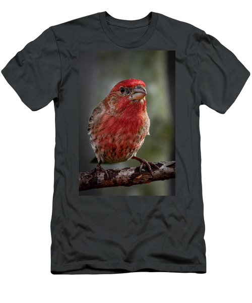 Men's T-Shirt (Athletic Fit) featuring the photograph Finch by Allin Sorenson