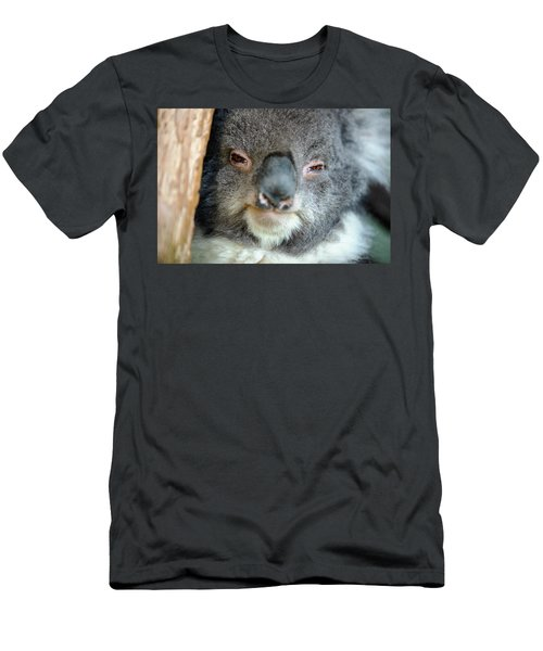 Men's T-Shirt (Athletic Fit) featuring the photograph Cute Australian Koala Resting During The Day. by Rob D Imagery
