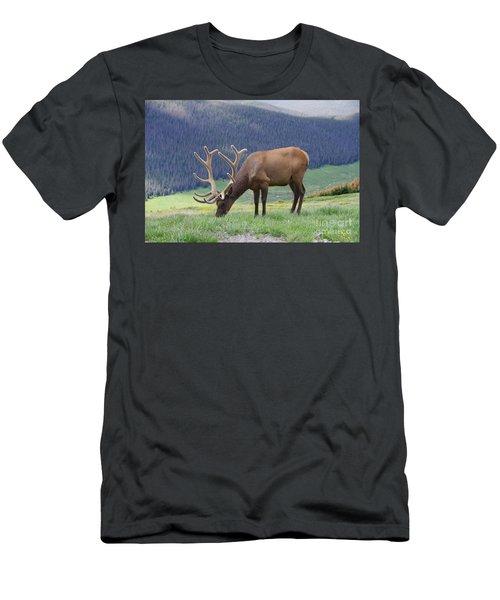 A Big Bull Elk Grazing Men's T-Shirt (Athletic Fit)