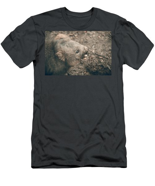 Men's T-Shirt (Athletic Fit) featuring the photograph Adorable Large Wombat During The Day Looking For Grass To Eat by Rob D Imagery