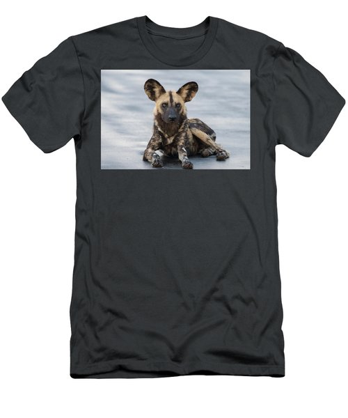African Wild Dog Resting On A Road Men's T-Shirt (Athletic Fit)