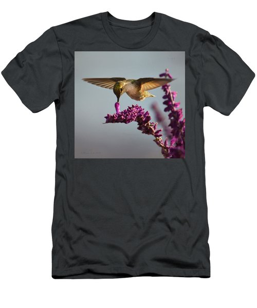 Anna's Hummingbird Sipping Nectar From Salvia Flower Men's T-Shirt (Athletic Fit)