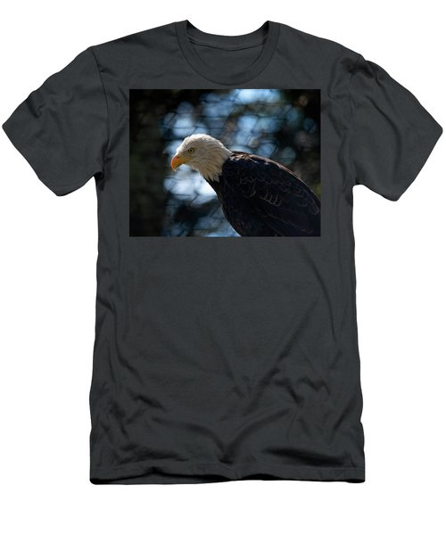 Bald Eagle Grandfather Mountain Men's T-Shirt (Athletic Fit)