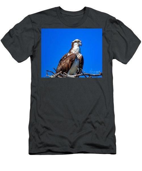 Beautiful Osprey Men's T-Shirt (Athletic Fit)