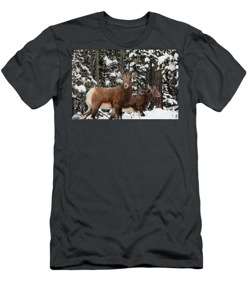 Bighorn Sheep In Deep Snow Men's T-Shirt (Athletic Fit)