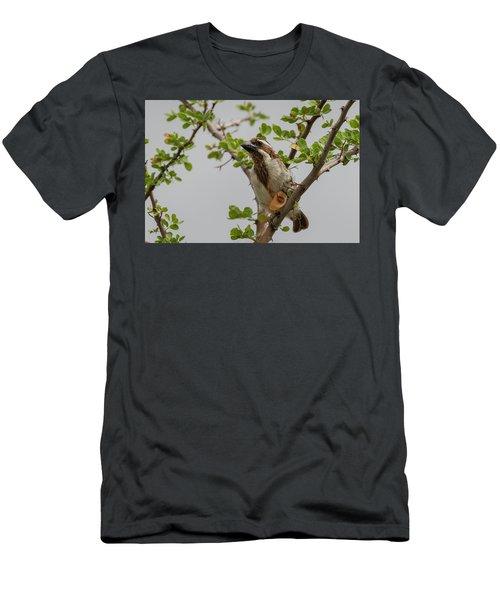 Black-throated Barbet Men's T-Shirt (Athletic Fit)