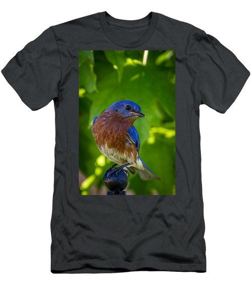 Bluebird Men's T-Shirt (Athletic Fit)