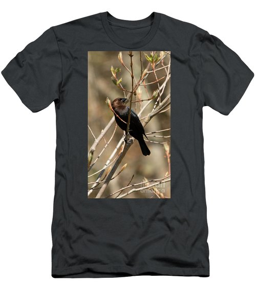 Brown-headed Cowbird 2 Men's T-Shirt (Athletic Fit)