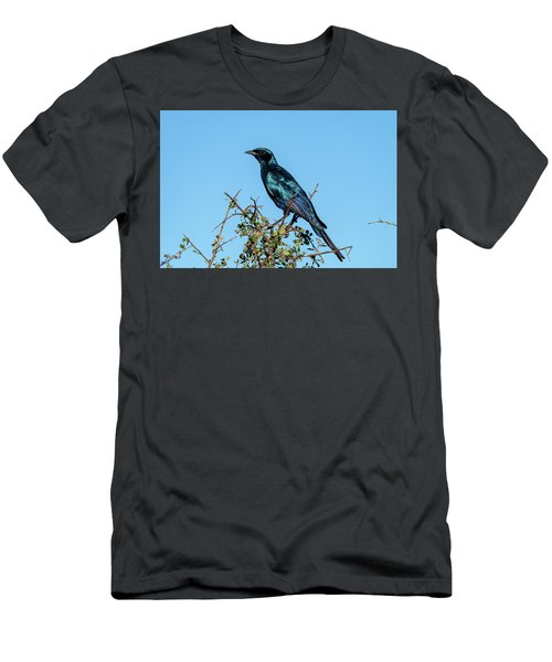 Burchell's Starling Men's T-Shirt (Athletic Fit)