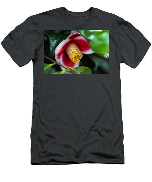Camellia Bloom And Leaves Men's T-Shirt (Athletic Fit)
