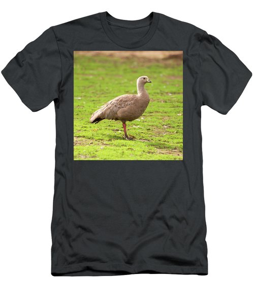 Cape Barron Goose Men's T-Shirt (Athletic Fit)