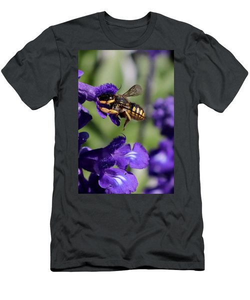 Carder Bee On Salvia Men's T-Shirt (Athletic Fit)