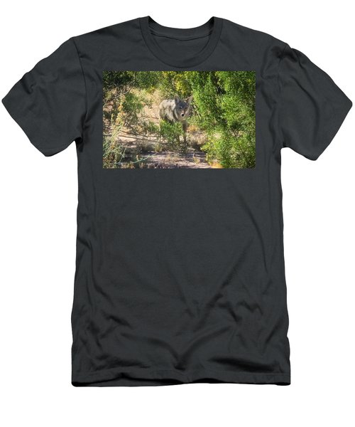 Cautious Coyote Men's T-Shirt (Athletic Fit)