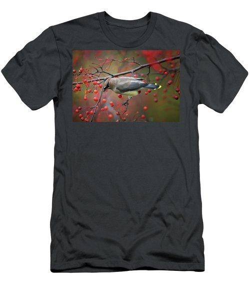 Cedar Waxwing 102206 Men's T-Shirt (Athletic Fit)