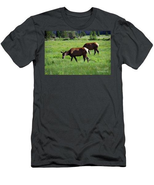 Cow Elk Grazing In A Meadow Men's T-Shirt (Athletic Fit)