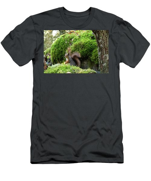Curious Squirrel Men's T-Shirt (Athletic Fit)