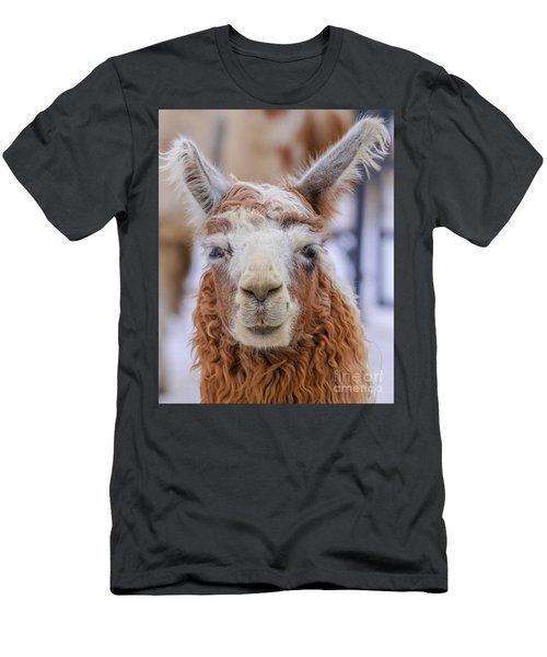 Cute Llama Men's T-Shirt (Athletic Fit)