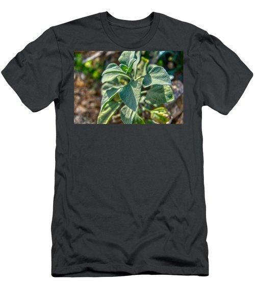 Desert Plant Life Men's T-Shirt (Athletic Fit)