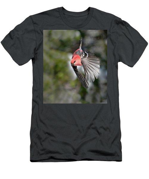 Diving Pine Grosbeak Men's T-Shirt (Athletic Fit)