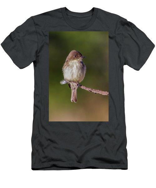 Eastern Pheobe Men's T-Shirt (Athletic Fit)