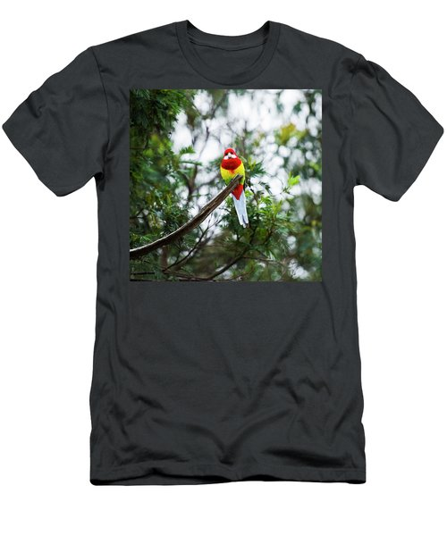 Eastern Rosella Men's T-Shirt (Athletic Fit)