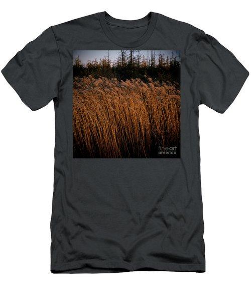 Evening Light Men's T-Shirt (Athletic Fit)