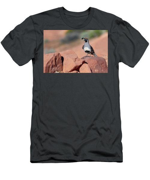 Gambels Quail One Men's T-Shirt (Athletic Fit)