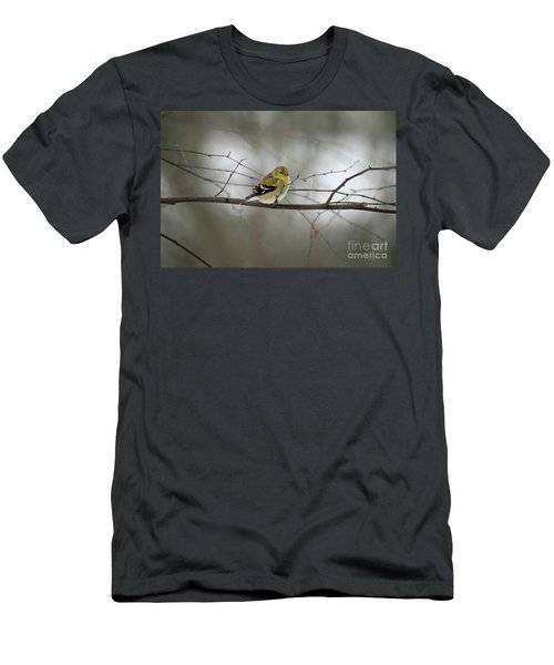 Goldfinch In Winter Looking At You Men's T-Shirt (Athletic Fit)