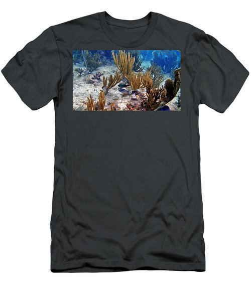 Gorgonian Parrotfish Men's T-Shirt (Athletic Fit)