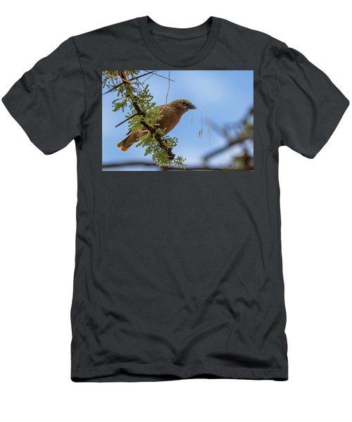 Gray-headed Social Weaver Men's T-Shirt (Athletic Fit)