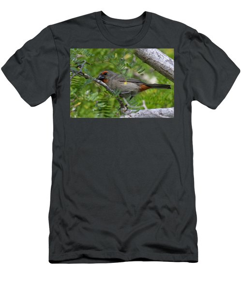 Greater Antillean Bullfinch Men's T-Shirt (Athletic Fit)